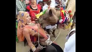 camel bj'ed jugs of rajasthani damsel